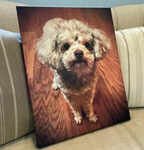 Pet canvas prints